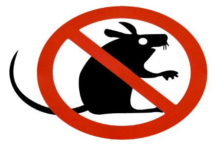 Disinfestation and rat extermination campaign